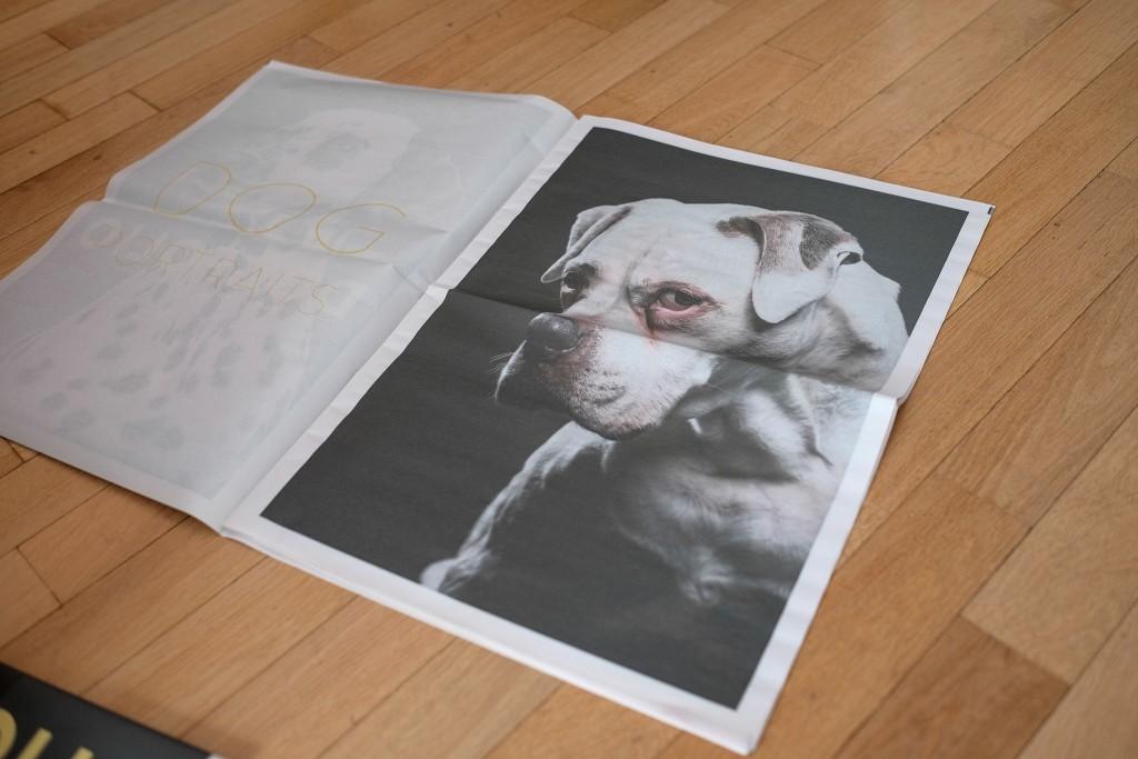 Dogfolio-6