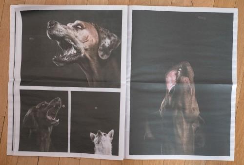 Dogfolio2