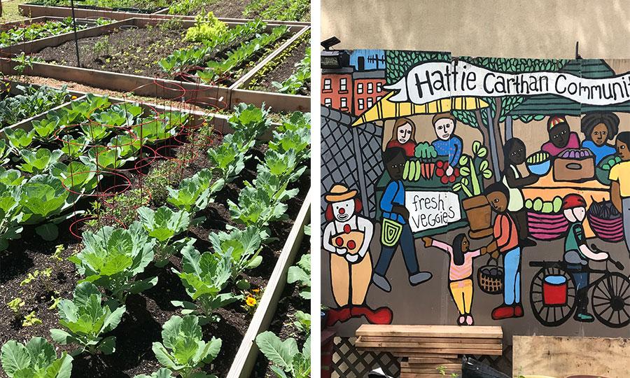 Hattie-Carthan-Community-Garden