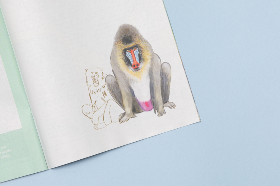 Illustrated baboon detail from Space Cadet zine